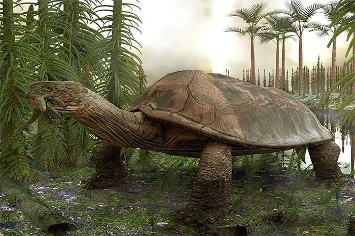 Phát hiện loài rùa khổng lồ, chén thịt được cả cá sấu