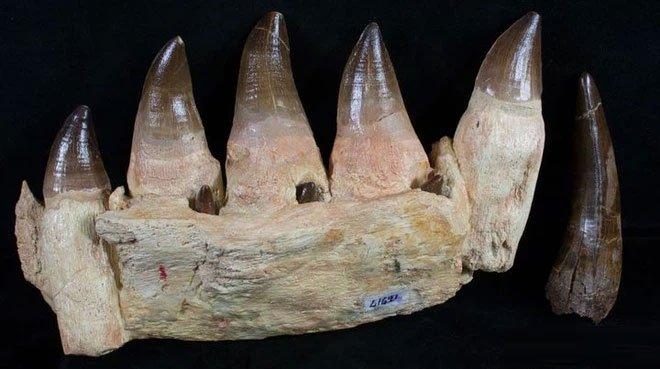 Phát hiện loài thương long mới sở hữu cá miệng của loài cá sấu