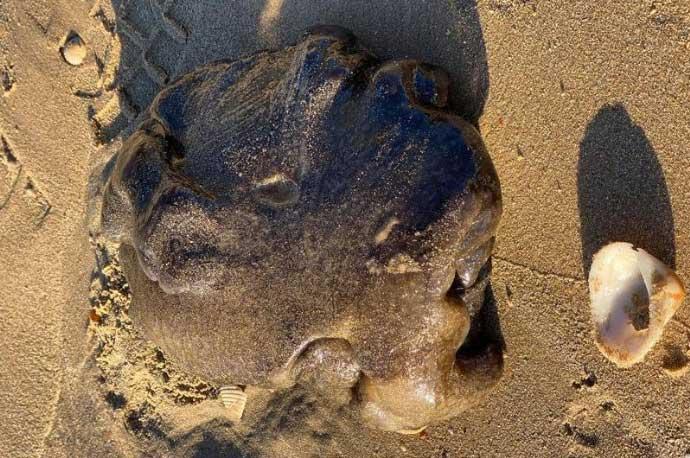 """Phát hiện """"long diên hương"""" đắt hơn vàng siêu hiếm trên bãi biển Úc?"""