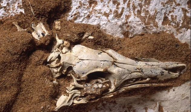 Phát hiện ma cà rồng 65 triệu tuổi vùi giữa sa mạc Mông Cổ