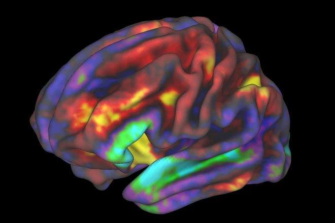 Phát hiện mới: Não phân tích dữ liệu theo hai cách khác nhau khi ở hai trạng thái đứng và nằm
