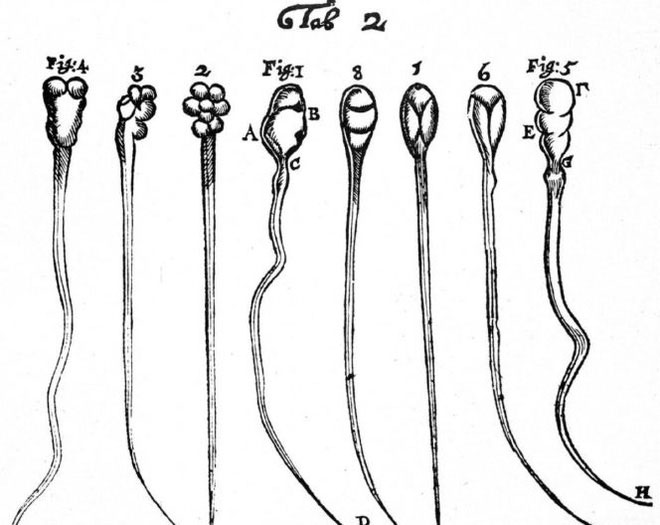 Phát hiện mới về cách hoạt động của tinh trùng, đánh đổ quan niệm sai lầm suốt 300 năm nay