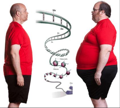 Phát hiện một loại gene giúp bạn ăn mãi không béo