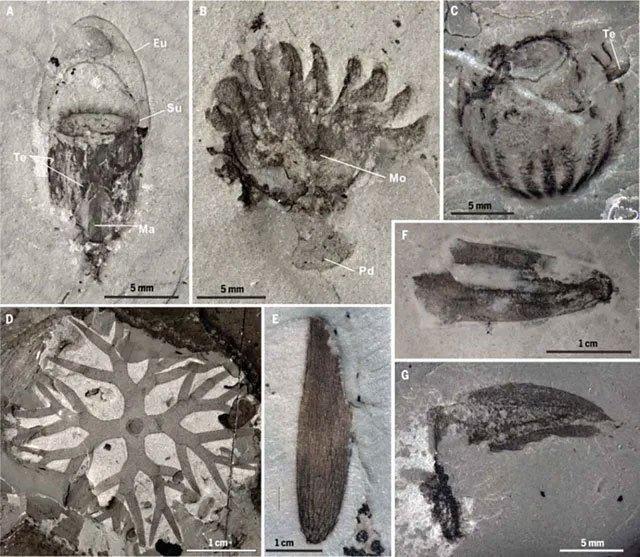 Phát hiện nhiều hóa thạch quý hiếm ở Trung Quốc