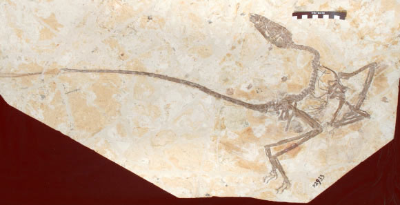 Phát hiện quái thú đầu khủng long, đuôi phượng hoàng