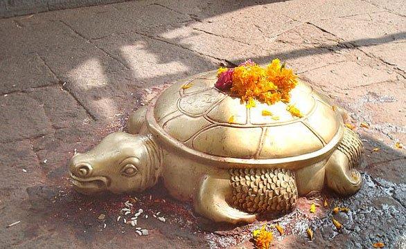 Phát hiện rùa vàng cực hiếm, thế giới mới gặp 5 con