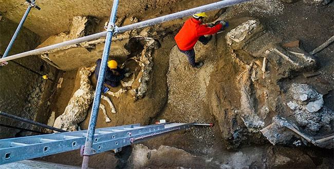 Phát hiện xác ngựa gần 2.000 năm vùi dưới tro núi lửa