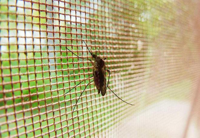 Phát triển thành công loại màn vừa an toàn với người, vừa tiêu diệt muỗi cực hiệu quả