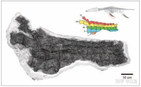 Predator X: Quái vật biển cả đáng sợ nhất kỷ Jura