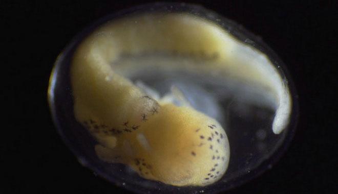 Quá trình biến đổi từ một tế bào thành sinh vật sống hoàn thiện chỉ trong vòng 6 phút