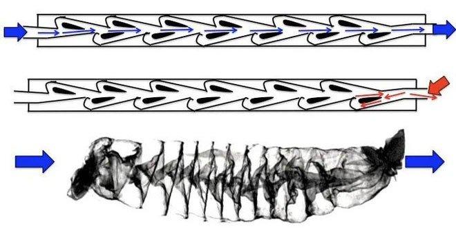 Quét CT ruột cá mập, các nhà nghiên cứu ngỡ ngàng tìm thấy phát minh khoa học của Nikola Tesla