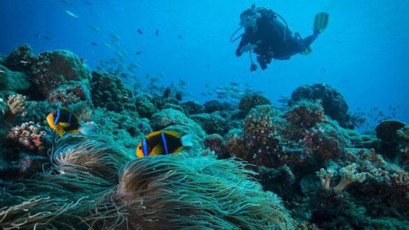 Quốc gia đầu tiên cấm kem chống nắng để bảo vệ san hô