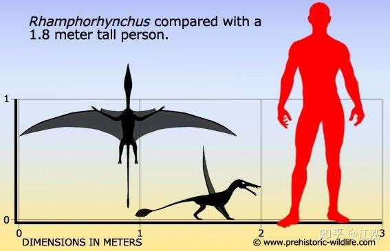 Rhamphorhynchus: Loài thằn lằn bay tí hon sở hữu hàm răng của tử thần