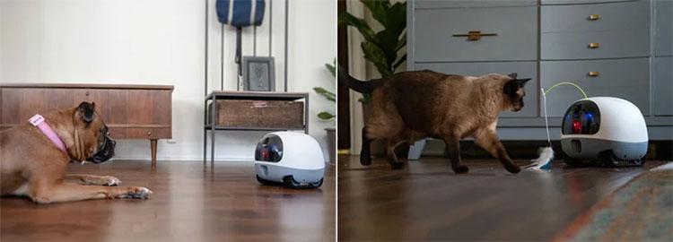 Robot cho phép người dùng gọi video với thú cưng từ xa