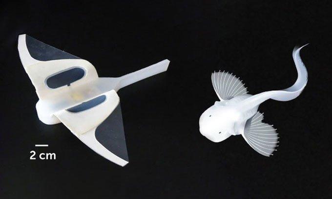 Robot thám biển biển sâu đập vây như cá