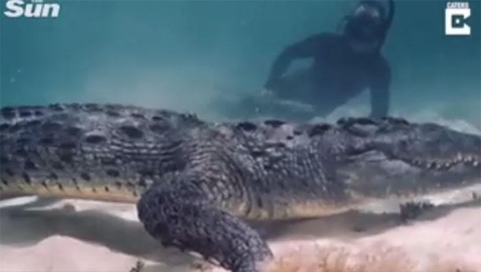 Rợn người cảnh thợ lặn đối đầu với cá sấu khổng lồ ở Mexico