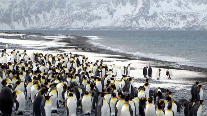 Rộng tới 4.200km2, tảng băng trôi lớn nhất thế giới này sắp gây ra sự kiện đại thảm họa