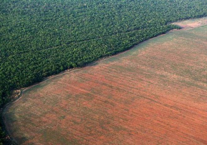 Rừng Amazon đang bị hủy diệt với tốc độ chưa từng thấy trong 10 năm qua