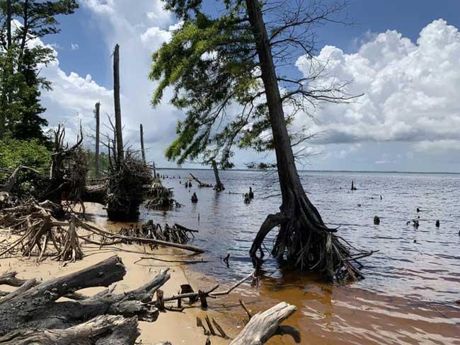 Rừng ma xuất hiện dọc bờ Đông nước Mỹ