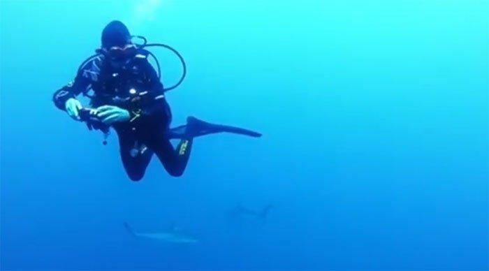 Rùng mình cảnh nữ thợ lặn bị hàng trăm con cá mập vây quanh