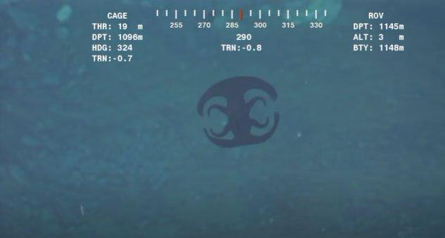 Rùng mình xem quái vật biển thay hình đổi dạng ở độ sâu 1127m, trước và sau trông chả liên quan