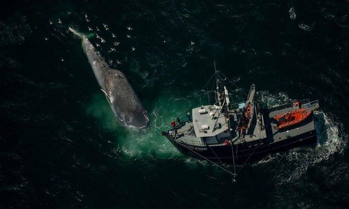 Santa Barbara - Eo biển tử thầnđối với cá voi
