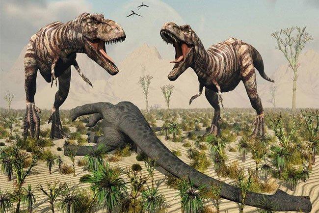 Sắp đấu giá hóa thạch T-Rex hoàn chỉnh nhất thế giới
