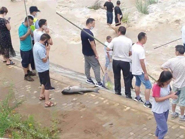 Sau mưa lũ, người dân đổ xô ra đường bắt cá
