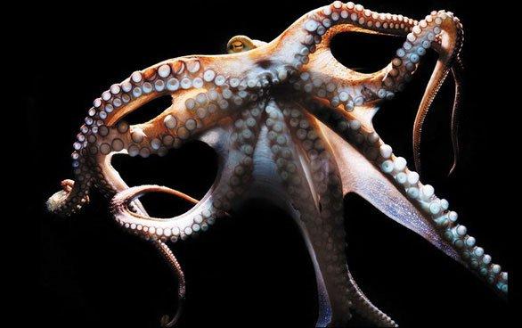 Siêu năng lực cảm nhận ánh sáng của bạch tuộc