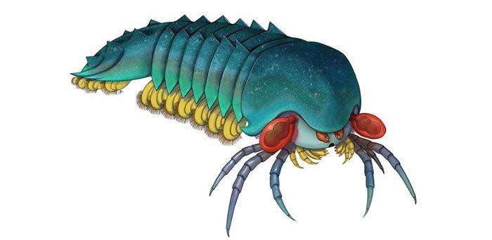 Sinh vật 500 triệu năm tuổi có quan hệ lâu đời nhất với bọ cạp và nhện