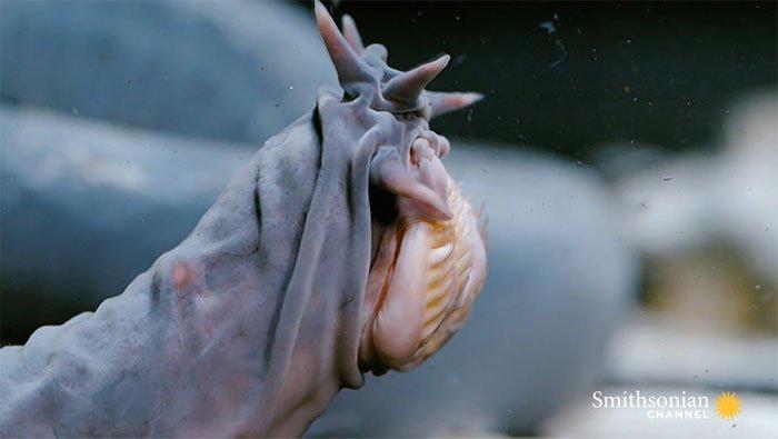 Sinh vật biển quy tụ tất cả những đặc điểm đáng sợ nhất mà bạn có thể nghĩ tới