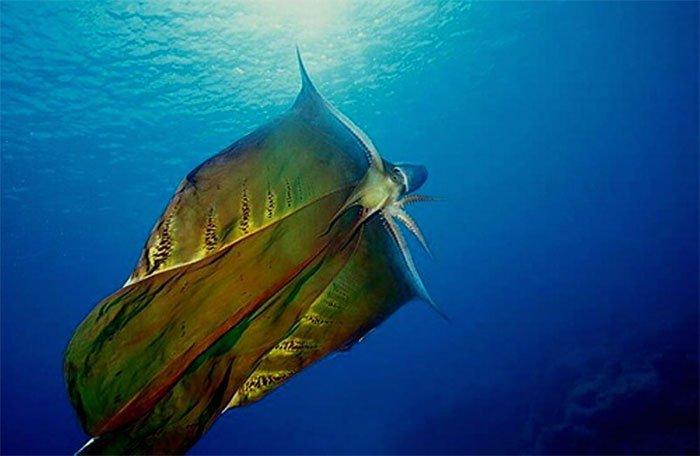 Sinh vật ngoài hành tinh vừa xuất hiện ở đảo Phú Quý là con gì?
