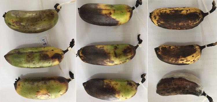 Sinh viên tạo dung dịch từ vỏ tôm giữ nông sản tươi hơn 10 ngày