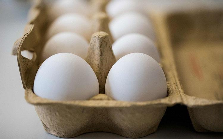 Soi giới tính giúp hàng triệu con gà trống thoát khỏi nạn thảm sát