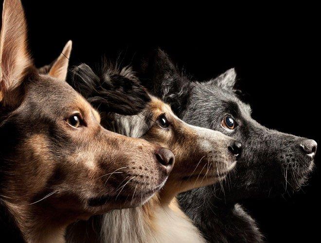 Sống với con người suốt 15.000 năm, não bộ những con chó đã bị chúng ta biến đổi