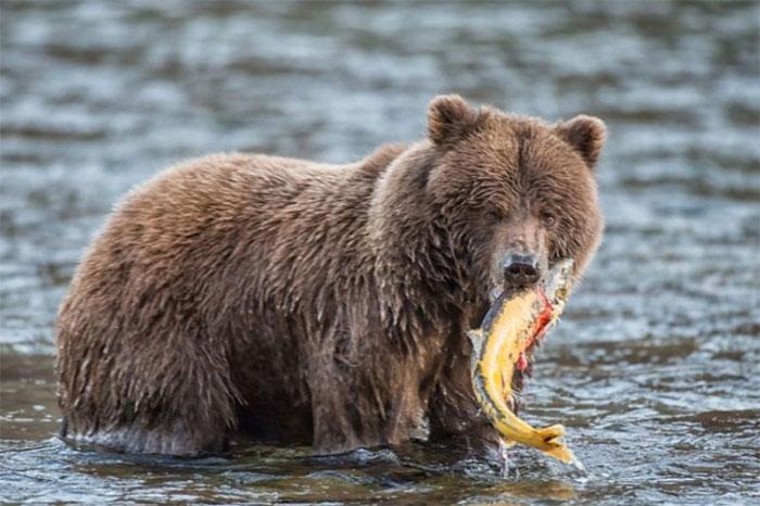 Sự hấp dẫn khác lạ của động vật hoang dã lúc vào thu