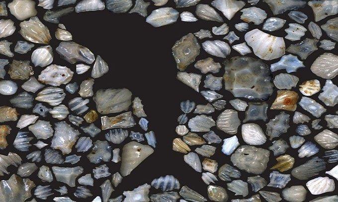 Sự kiện bí ẩn suýt xóa sổ cá mập 19 triệu năm trước