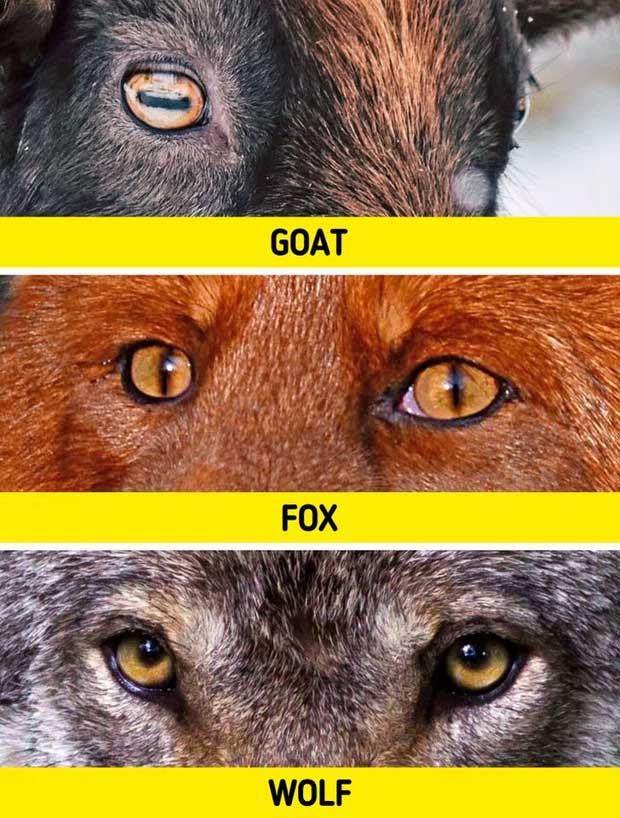 Sự thật khó tin về các loài động vật cho chúng ta thấy mẹ thiên nhiên đã sáng tạo đến mức nào