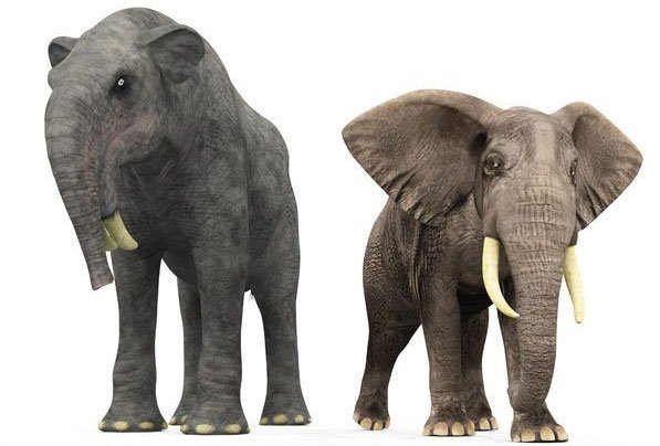 Sự thật là tổ tiên của voi và tê giác cổ đại có vẻ ngoài quái dị hơn ngày nay nhiều!