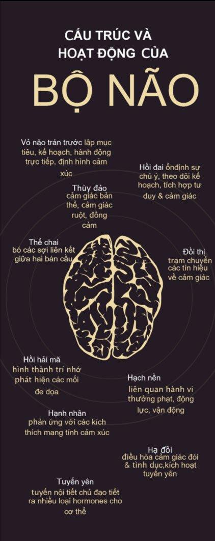 Sự thay đổi cấu trúc não khi thực hành thiền định