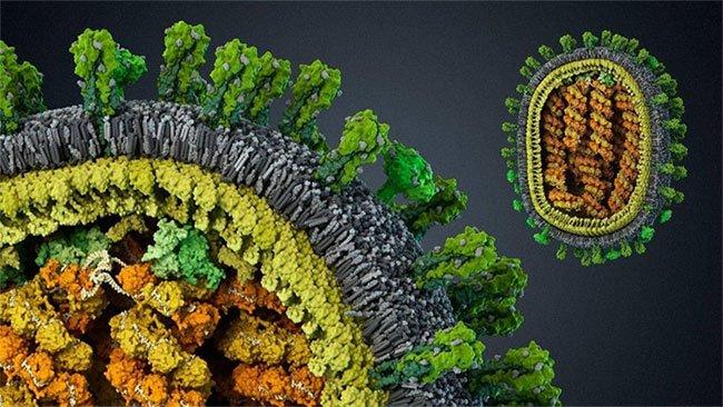 Sự tiến hóa của bệnh tật và lịch sử cuộc chiến chống virus của loài người