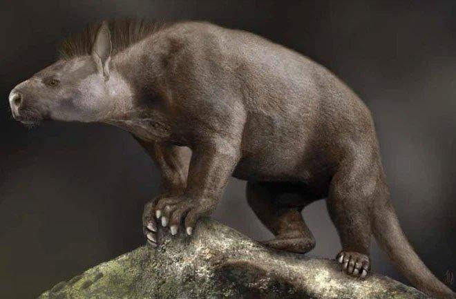 Sự tiến hóa của mắt cá chân và bàn chân đã giúp động vật có vú vươn lên chiếm lĩnh Trái đất