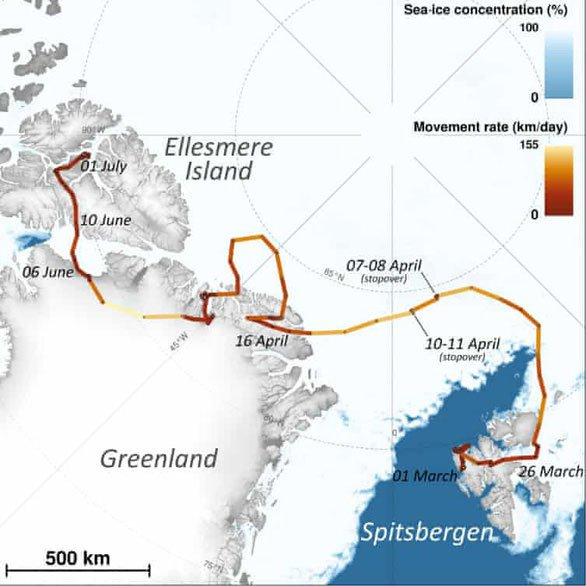 Sửng sốt cáo tuyết vượt 3.500km chỉ trong 76 ngày