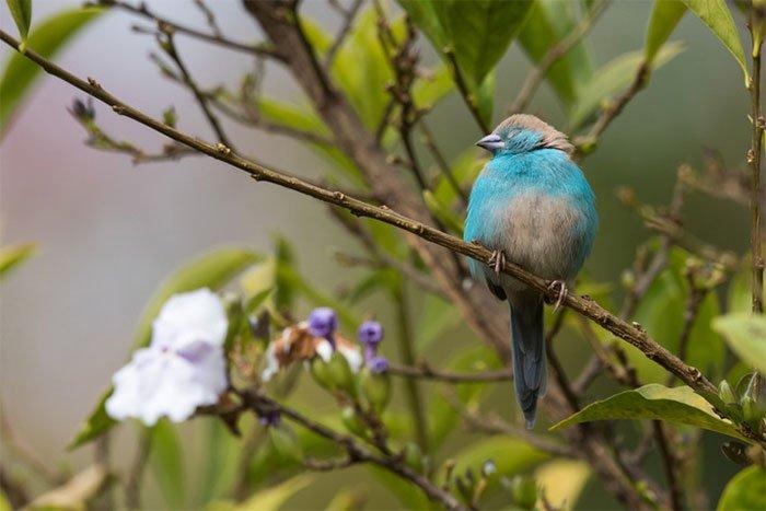 Tại sao chim không rơi khỏi cành cây khi ngủ?