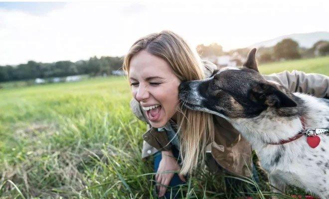 Tại sao chó lại thích liếm chủ?