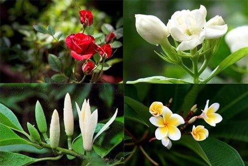 Tại sao có loài hoa thơm và loài hoa không thơm?