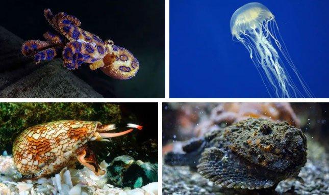 Tại sao có rất nhiều loài động vật nguy hiểm sinh sống ở Úc?