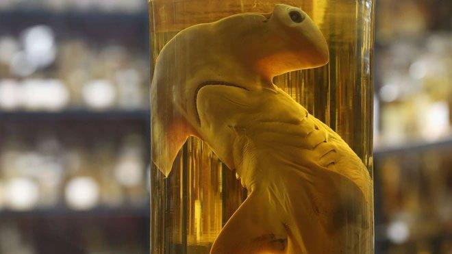 Tại sao cồn được dùng để bảo quản các mẫu vật?