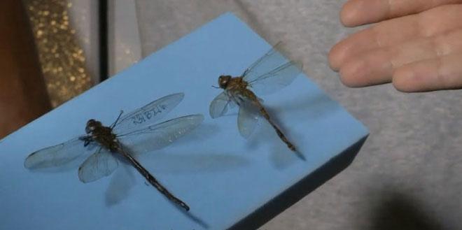 Tại sao côn trùng lại có kích thước nhỏ bé như vậy? Vì sao con gián mất đầu mà vẫn có thể sống?