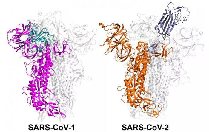 Tại sao Covid-19 lây lan với tốc độ khủng khiếp hơn nhiều so với đại dịch SARS?